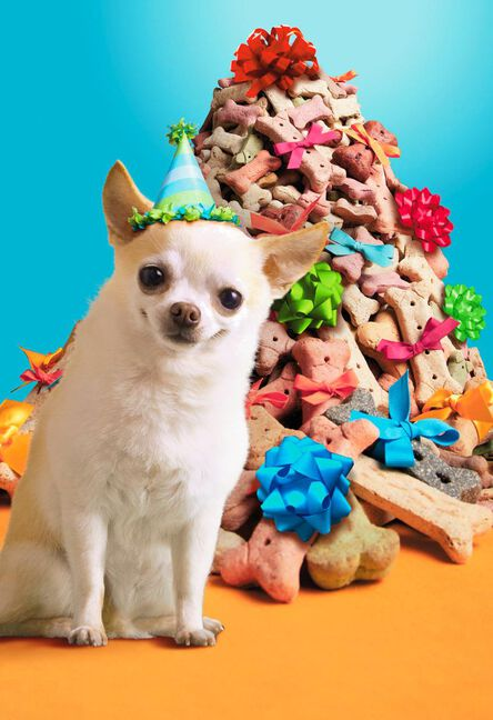 Chihuahua In Party Hat With Dog Bones Funny Birthday Card Greeting