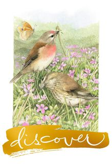 Discover Good Things Marjolein Bastin Birthday Card,