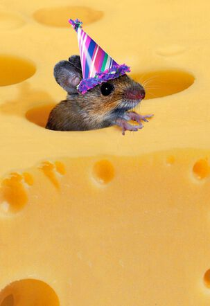 One of the Gouda Ones Funny Birthday Card
