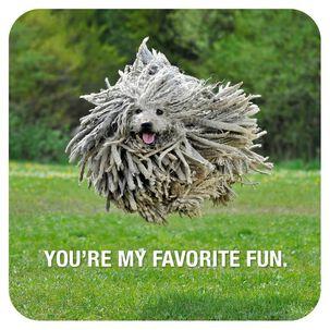 Jumping Hairy Dog Birthday Card