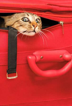 Cat in a Suitcase Birthday Card
