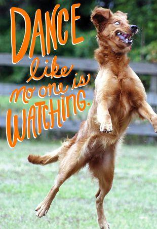 Dancing Dog Funny Birthday Card