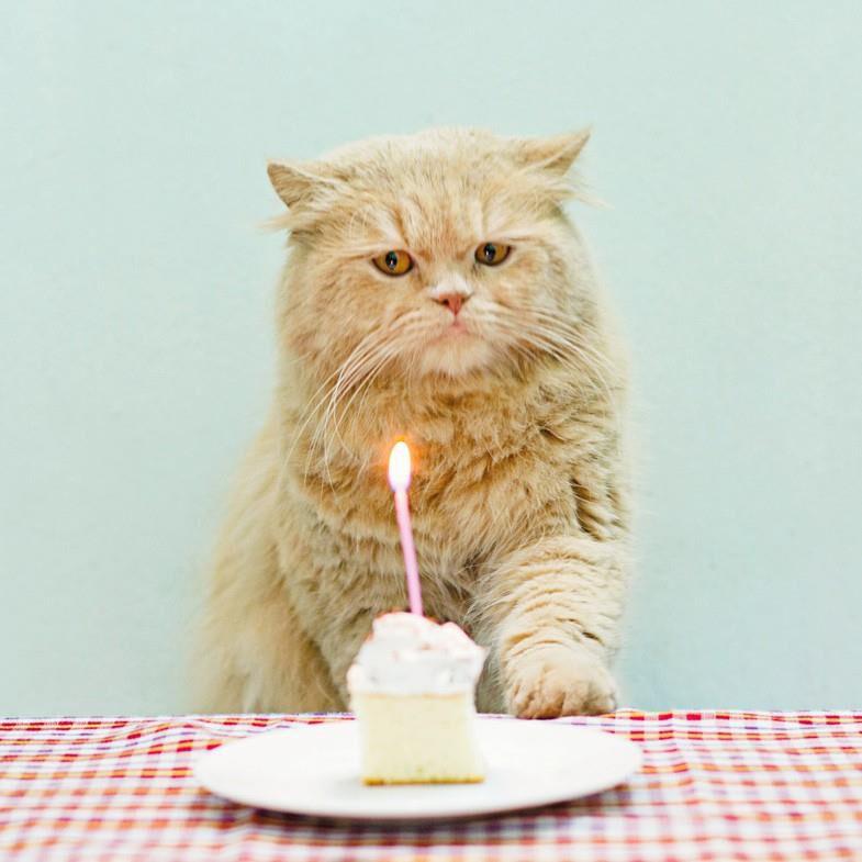 Grumpy Cat Birthday Card Greeting Cards Hallmark