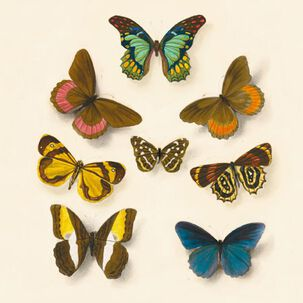 Colorful Butterflies Blank Just Because Card