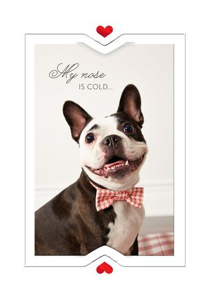 Bow Tie Doggie Valentine's Day Card for Anyone