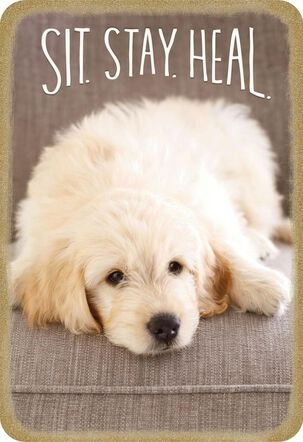 Sit, Stay, Heal Puppy Dog Speedy Recovery Card