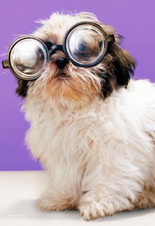 Shih Tzu Dog in Glasses Funny Birthday Card