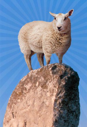 You Rock! Sheep on Boulder Thank You Card
