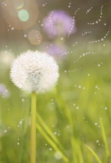 Summer Dandelion Bloom Blank Card,