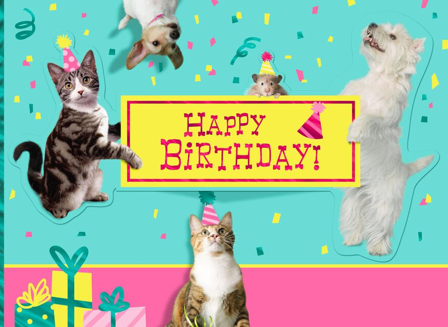 Party Animal Birthday Card Greeting Cards Hallmark