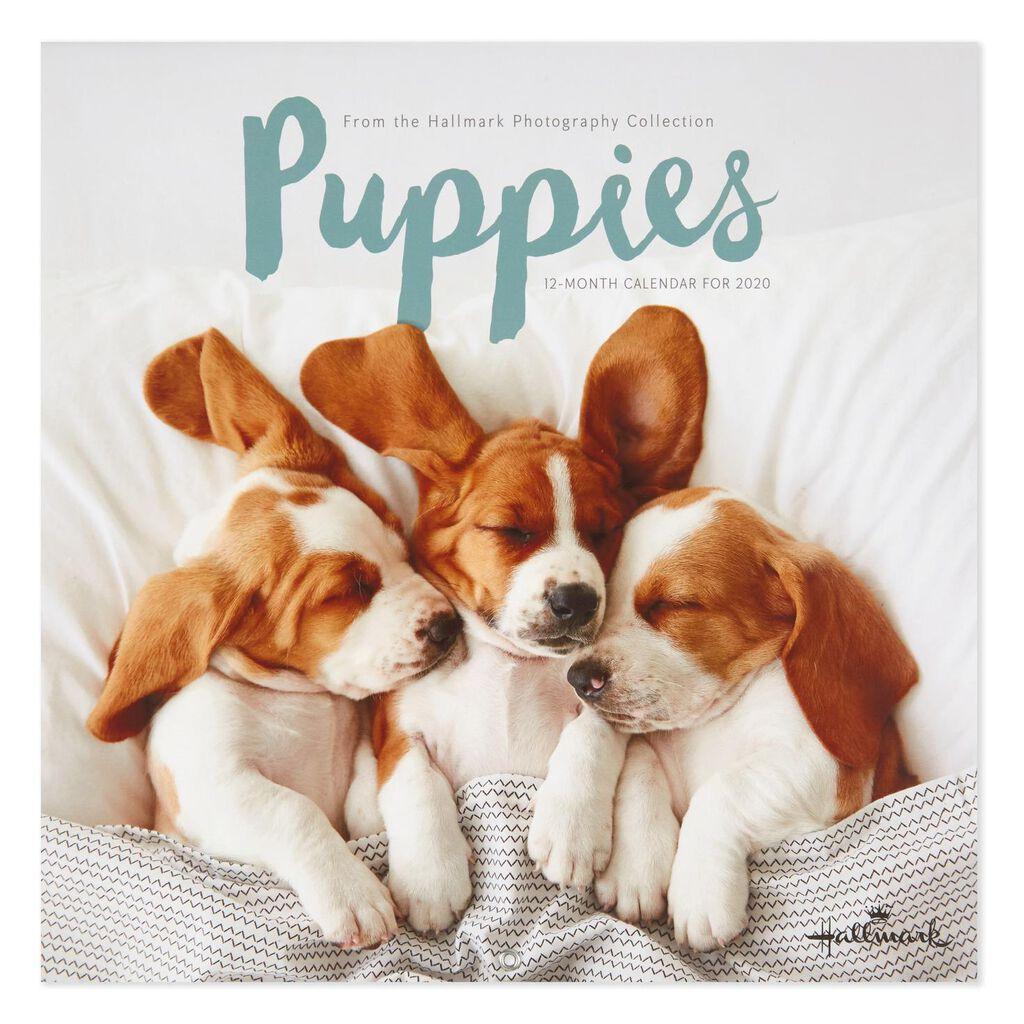 Puppies 2020 Wall Calendar, 12-Month