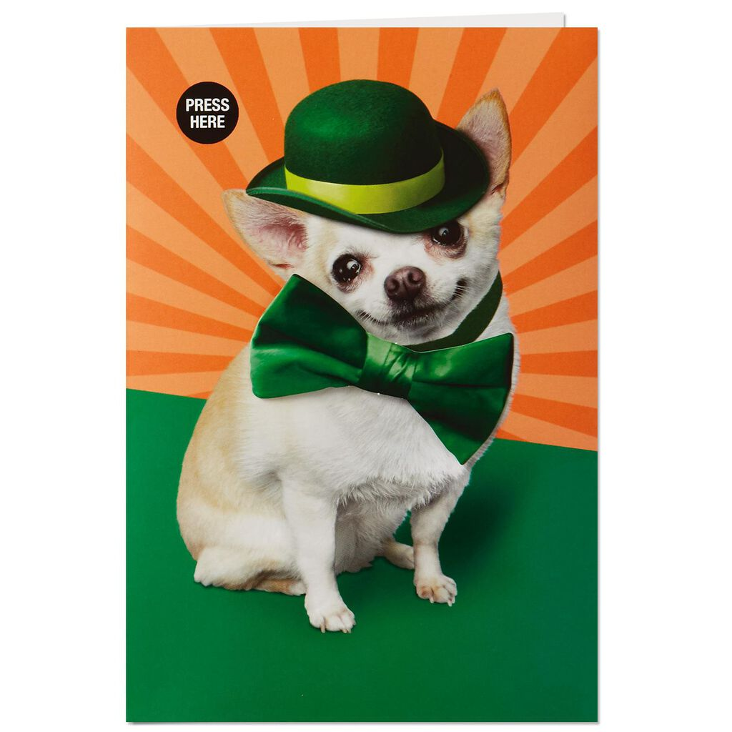 Chihuahua Musical St Patricks Day Card With Motion Greeting
