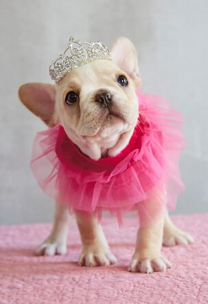 Fancy Dog in a Tutu Birthday Card