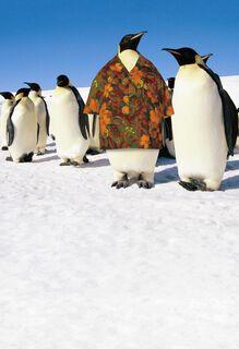 Hawaiian Shirt Penguin Father's Day Card,