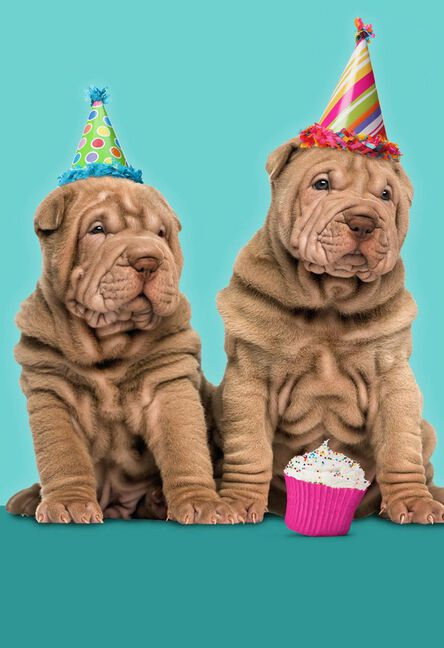 Wrinkly Dogs With Party Hats Funny Birthday Card For Friend