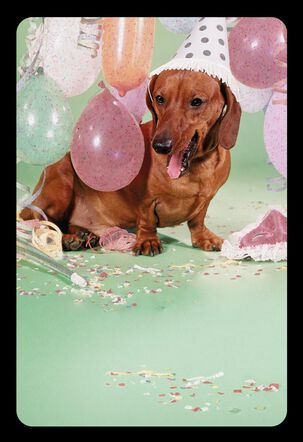 Whatever Makes Your Wiener Happy Funny Birthday Card