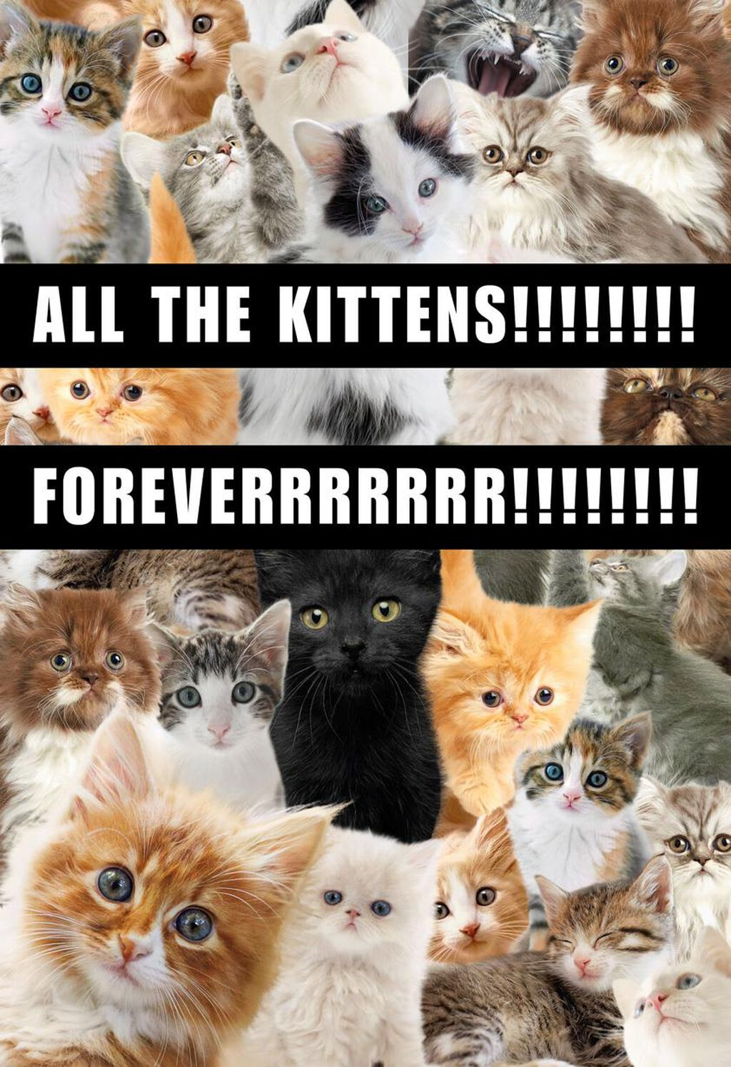 All The Kittens Funny Birthday Card