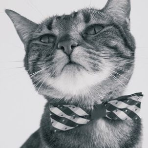 Cat Bow Tie Blank Card