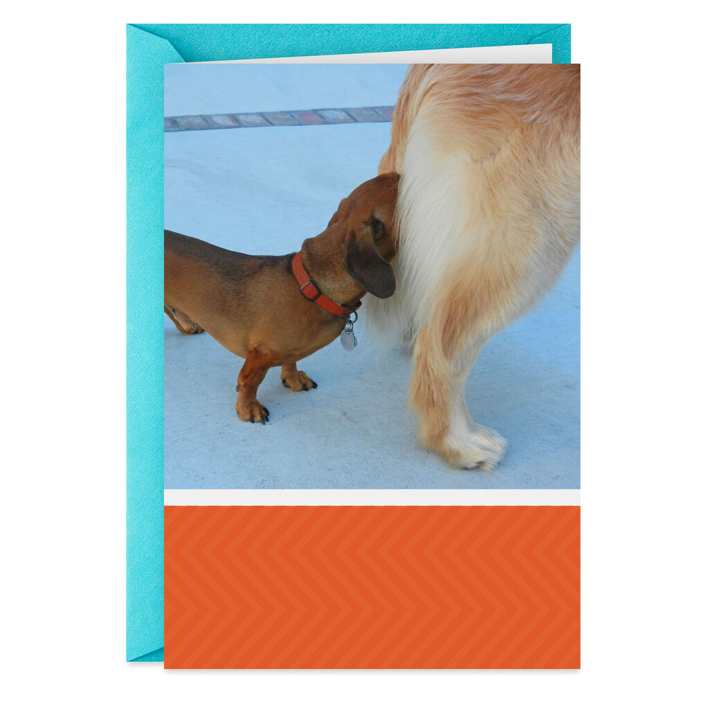 Sniffing Dogs Funny Birthday Card