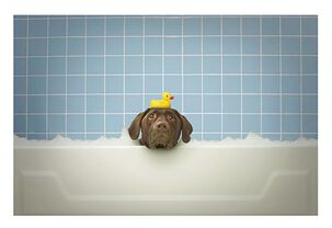 Dog in a Bubble Bath Funny Encouragement Card