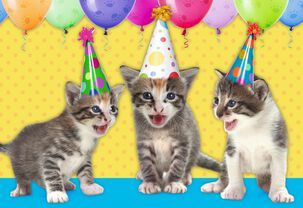 Cats Meowing Birthday Song Card