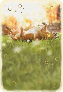 Dog Rolling in the Grass Blank Card,