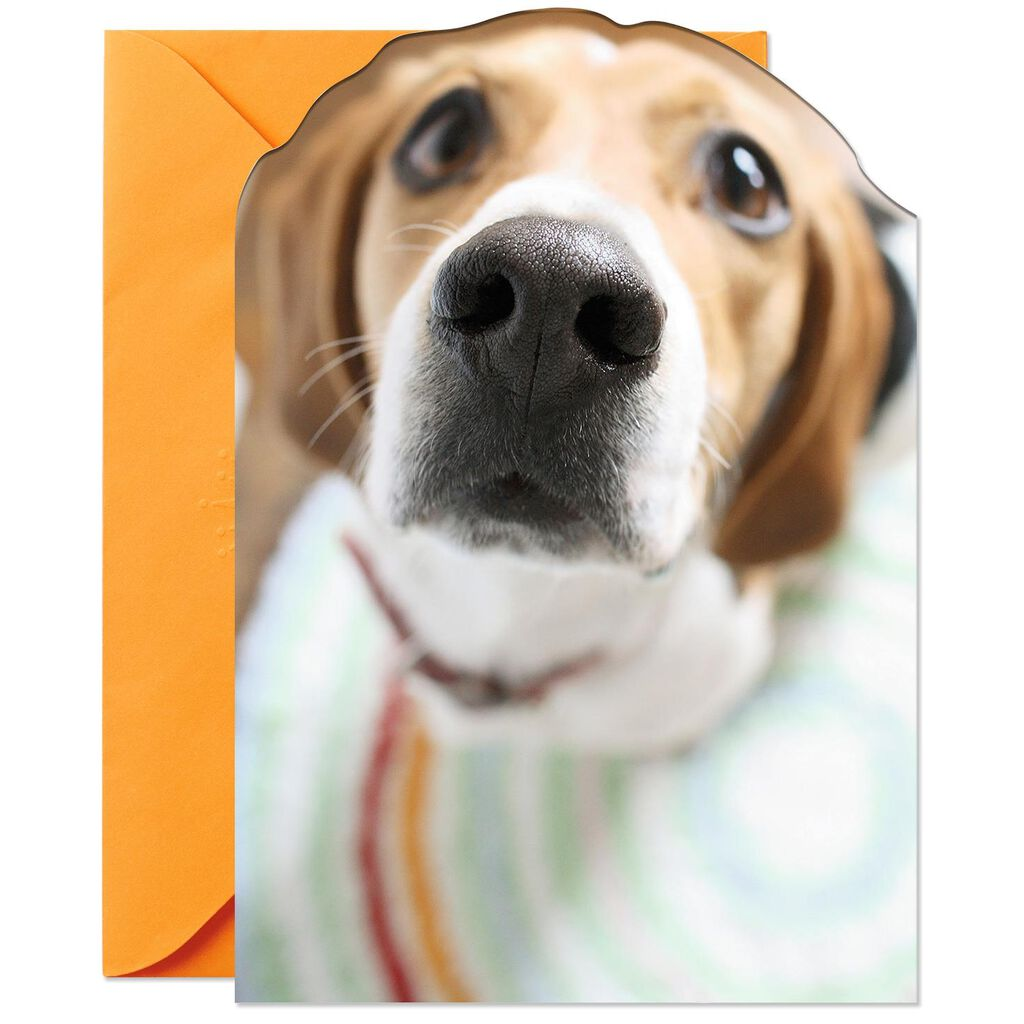 Sniffing Dog Funny Birthday Card
