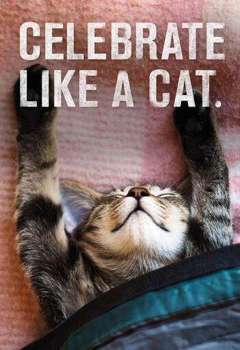 Celebrate Like A Cat Birthday Card