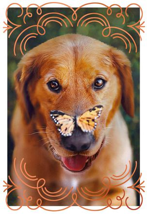 Dog and Butterfly Friendship Card