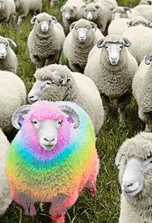 Rainbow Ram Birthday Card,