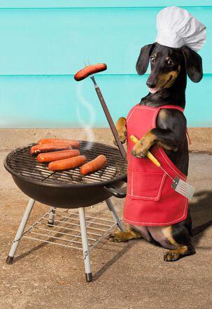 Wiener Dog Funny Congratulations Card
