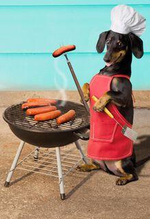 Wiener Dog Funny Congratulations Card,