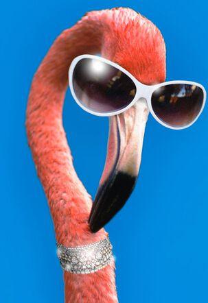 Lookin' Good Flamingo Funny Birthday Card