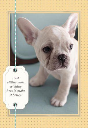 Sad White Bulldog Puppy Encouragement Card