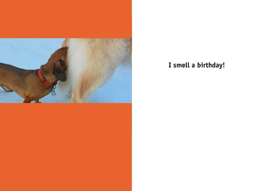 Butt Sniffing Dog Funny Birthday Card,