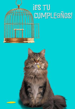 Cat and Empty Birdcage Funny Birthday Card