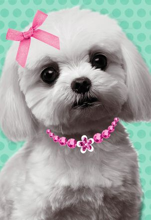 White Puppy with Pink Bow Birthday Card for Daughter