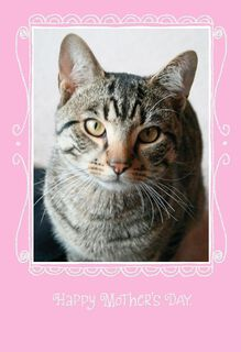 Cat Joke Mother's Day Card,