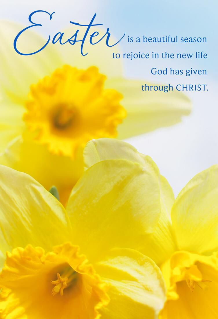 Yellow daffodils religious easter cards pack of 6 boxed cards yellow daffodils religious easter cards pack of 6 boxed cards hallmark kristyandbryce Images