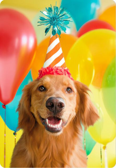 Smiling Party Dog Jumbo Birthday Card 16 25 Greeting Cards