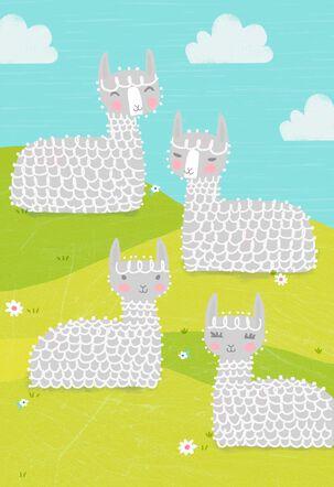 Alpacas on a Grassy Hill Blank Card