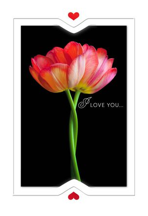 Two Tulips Our Day Anniversary Card