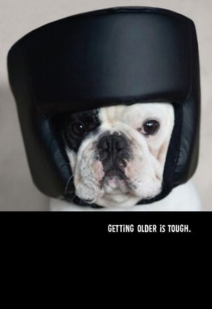 French Bulldog in a Boxing Helmet Funny Birthday Card