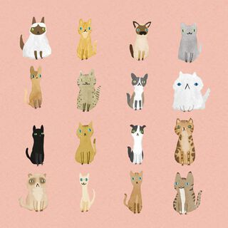 Unique Cat Personalities Blank Card,