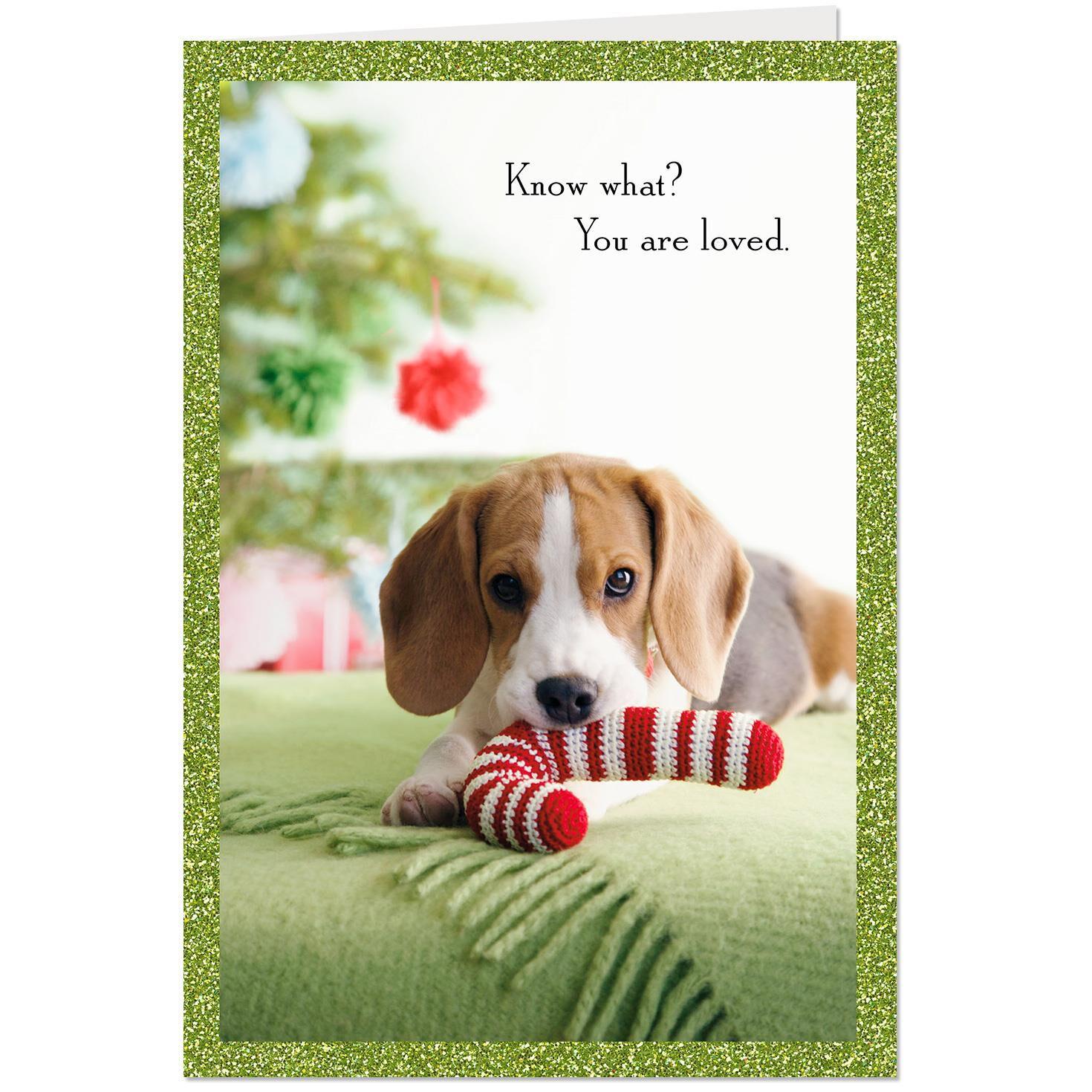 Dog Christmas Card Photo.You Are Loved Christmas Dog Christmas Card