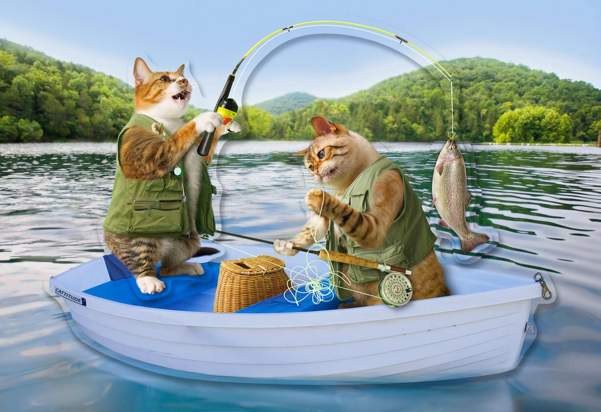 cute cats fishing funny father u0026 39 s day card for dad