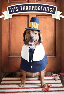 Plenty of Happy Thanksgiving Card,