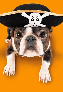 Awesome Pirate Dog Halloween Card,