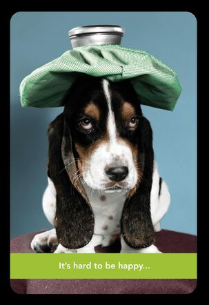 Basset Hound With Ice Pack Get Well Card