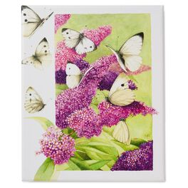 Butterfly Garden 8x10 Wrapped Canvas Art by Marjolein Bastin, , large